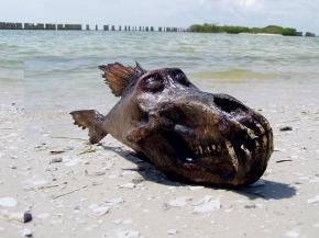babfish.jpg